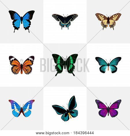 Realistic Purple Monarch, Bluewing, Beauty Fly And Other Vector Elements. Set Of Moth Realistic Symbols Also Includes Fly, Swallowtail, Purple Objects.