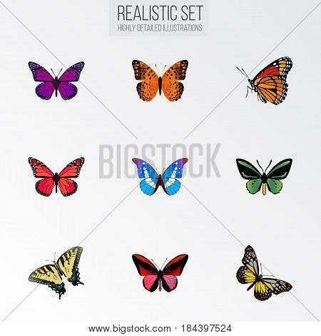 Realistic Danaus Plexippus, Milkweed, Bluewing And Other Vector Elements. Set Of Butterfly Realistic Symbols Also Includes Butterfly, Bluewing, Fly Objects.