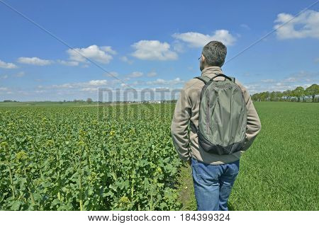 A man admiring a rural ladscape with fields of growing oilseed and grain