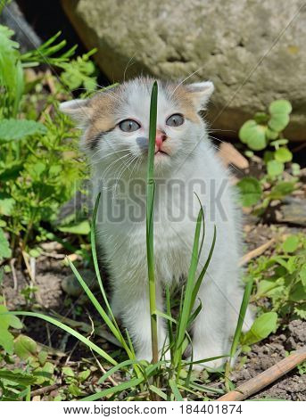 A close up of the small kitten at blade of grass.