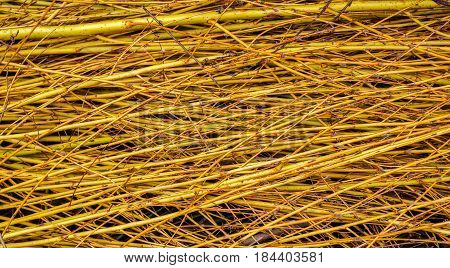 Willow branches abstract background, closeup view .