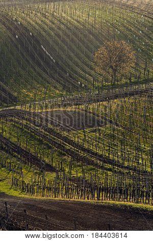 Spring landscape with vineyards. South of Moravia Czech Republic.