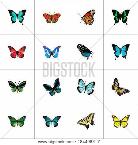 Realistic Summer Insect, Milkweed, Hairstreak And Other Vector Elements. Set Of Beauty Realistic Symbols Also Includes Blue, Monarch, Green Objects.