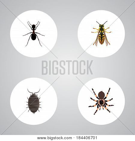 Realistic Dor, Tarantula, Ant And Other Vector Elements. Set Of Bug Realistic Symbols Also Includes Pismire, Bee, Sting Objects.