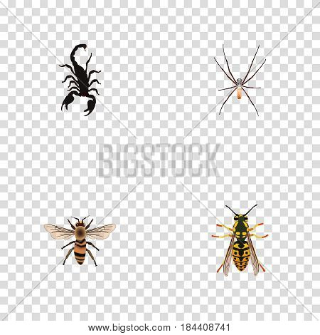 Realistic Spider, Wisp, Bee And Other Vector Elements. Set Of Animal Realistic Symbols Also Includes Insect, Wasp, Wisp Objects.