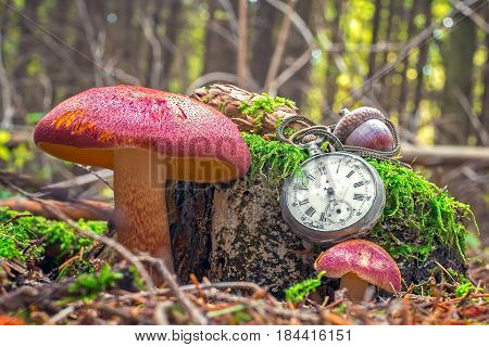 The passing of time - An vintage pocket watch on bunchers tree trunk with red mushroom in autumn forest.