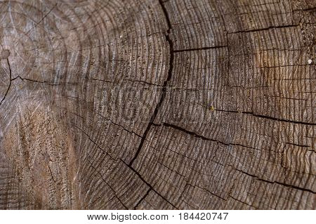 Tree trunk background and texture. Wood texture of cut tree trunk. Closeup view of old wood texture. Abstract texture and background for designers. wooden background. Natural pattern.