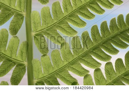 Fern Leaf Close-up in Spring and Summer
