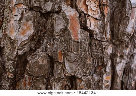 Pine tree bark background. Bark tree texture. Abstract texture and background for designers. Organic texture. Rough abstract texture. Natural pattern. Macro view of pine tree bark texture.