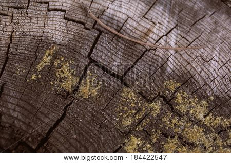 Tree trunk background and texture. Wood texture of cut tree trunk. Closeup view of old wood texture. Abstract texture and background for designers. Natural wooden background. Organic pattern.