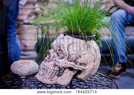 Flower Pot As A A Human Skull. Side View. Decorative Pot. Interior Vase. Creative Pot.