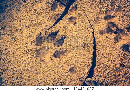 Dog Footprints At The Cracked Ground. Vintage Effect Tone.