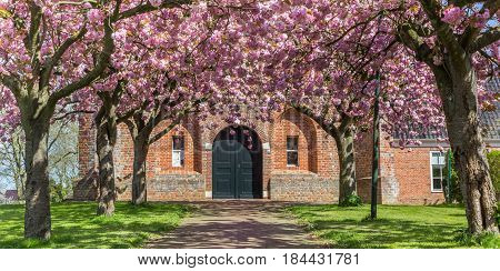 Panorama of cherry blossom in front of the old church in Ten Boer Holland