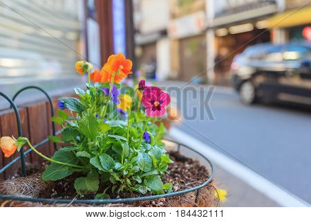 Colorful flowers infront of cafe shop in Kyoto Japan