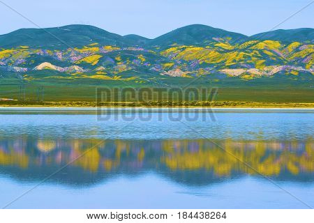 Rural lush green hills with wildflowers during spring reflecting on Soda Lake taken in the Carrizo Plain, CA