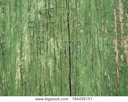 Old wooden texture and old green paint