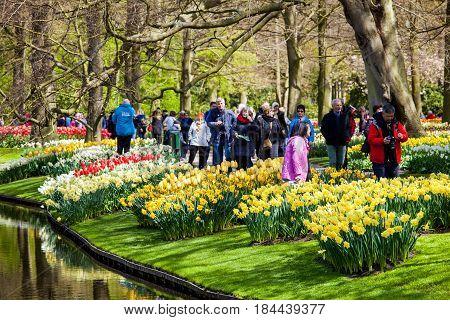 Keukenhof, Netherlands - April, 2017: Different color tulips on the river bank in Keukenhof park in Amsterdam area, Netherlands. Spring blossom in Keukenhof
