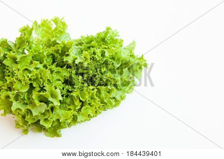 Green Kinky Salad Isolated On White Background. Daylight, Open Space For Your Text.