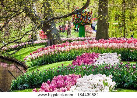 Different color tulips on the river bank in Keukenhof park in Amsterdam area, Netherlands. Spring blossom in Keukenhof