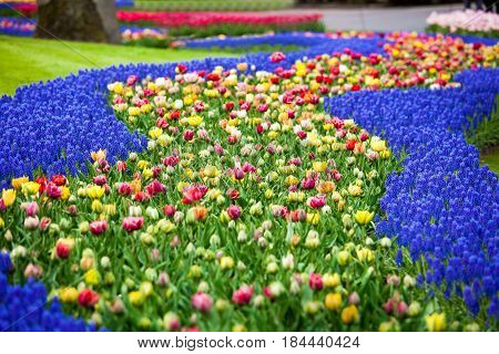 Flower river in Keukenhof park in Amsterdam area, Netherlands. Colorful flowers field