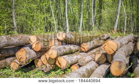 A pile of oak timber in the forest.