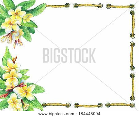 Square frame with tropical resort flowers frangipani (plumeria). Hand drawn watercolor painting on white background.