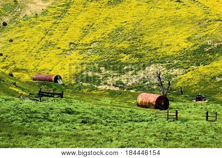 Forgotten abandoned ranchland taken on lush green grasslands with wildflowers taken in the Carrizo Plain, CA
