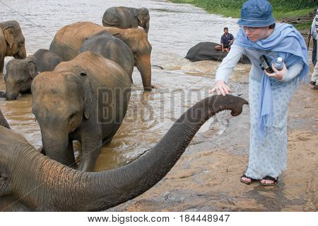 Elephants From The Pinnewala Elephant Orphanage Enjoy Their Daily Bath