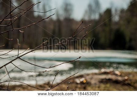 spring background texture: the ice edge on the water of forest lake