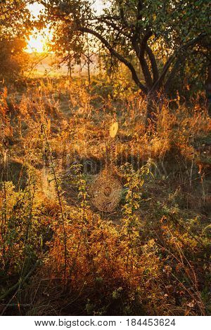 Morning landscape. Warm morning sunlight. Dew on the grass in morning. Web hanging on grass in morning.