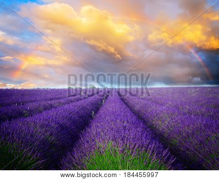Lavender flowers field rows with summer blue and pink sunset sky with rainbow, Provence, France