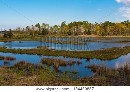 The Salt Marshes come alive with the onset of Spring