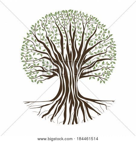 Illustration of Big Oak Tree Over White