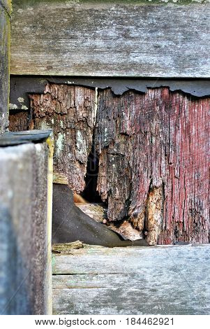 Wood rotting on the wall of a barn.