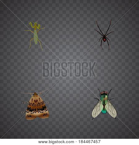 Realistic Butterfly, Housefly, Grasshopper And Other Vector Elements. Set Of Bug Realistic Symbols Also Includes Locust, Jewel, Wasp Objects.