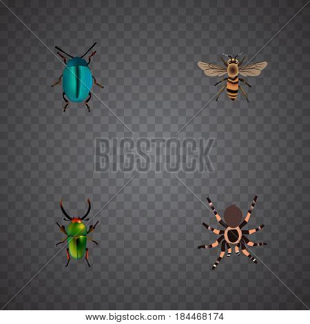 Realistic Tarantula, Insect, Bug And Other Vector Elements. Set Of Animal Realistic Symbols Also Includes Arachnid, Green, Blue Objects.