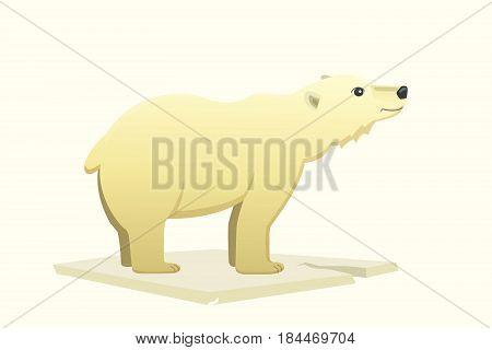 Polar white bear vector cartoon arctic isolated animal.