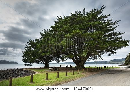 Auckland New Zealand - March 2 2017: Two tall green windswept trees at the shoreline of Whatipu Point on Huia Bay under heavy cloudy sky. Entrance to Tasman Sea in back. Road and lawn in front.