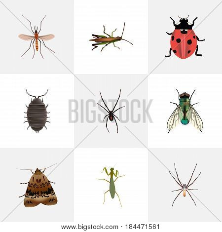 Realistic Gnat, Locust, Dor And Other Vector Elements. Set Of Animal Realistic Symbols Also Includes Beetle, Mosquito, Bug Objects.