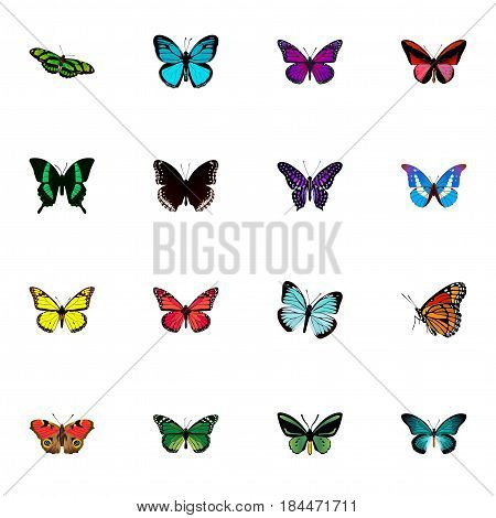 Realistic Archippus, Beauty Fly, Polyommatus Icarus And Other Vector Elements. Set Of Moth Realistic Symbols Also Includes Purple, Monarch, Pink Objects.