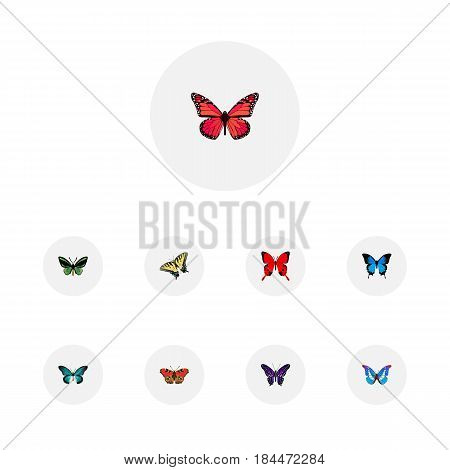 Realistic Sangaris, Bluewing, Common Blue And Other Vector Elements. Set Of Beauty Realistic Symbols Also Includes Brown, Tiger, Purple Objects.
