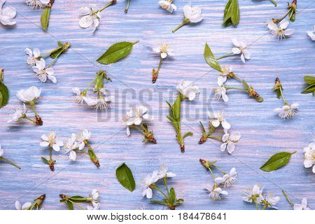 Patern Texture of Spring Flowers on the background of an old vintage blue board