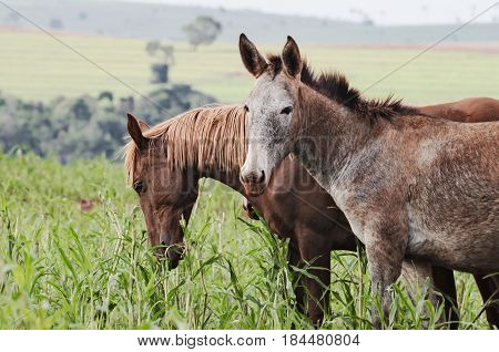 Farm Animals: A Donkey And A Horse On A Pasture Of A Farm