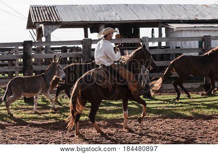 Cowboy Riding A Horse On Corral Of A Farm