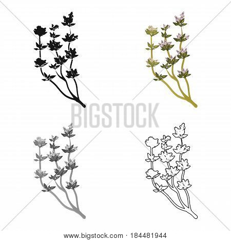 The Mongolian medicinal plant Artysh.Symbol of Mongolia.Mongolia single icon in cartoon style vector symbol stock web illustration.