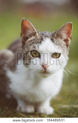 Cat portrait, cute cat in garden