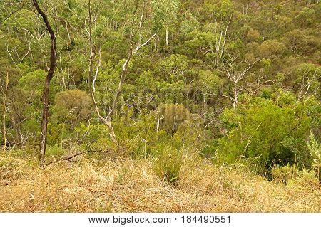 View of dry brown Australian bush land scrub along a bush walking trail near Adelaide