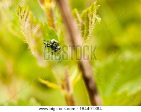A Bug Hidden Inside A Leaf Cool Looking Green