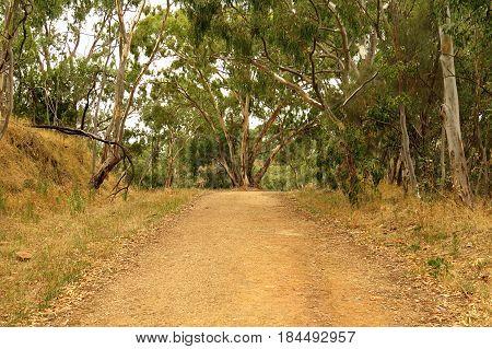 Australian bush walking trail brown dry grass and gum Eucalyptus trees warm tones