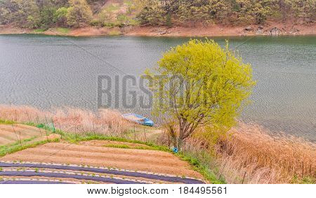Landscape of a small blue boat docked on a riverbank of tall reeds with a small field of crops in foreground and far shoreline and trees in background.